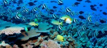 Koh Samui Coral Reef